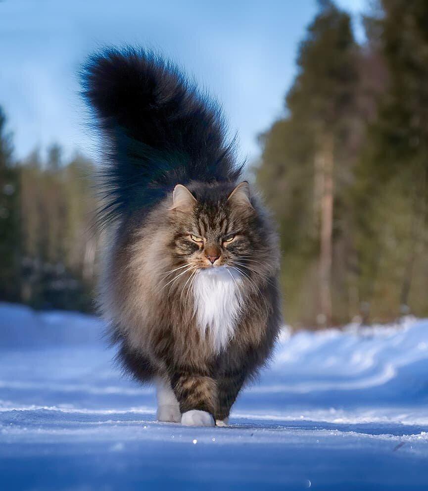 рыба лесная сибирская кошка фото снимка откинулся
