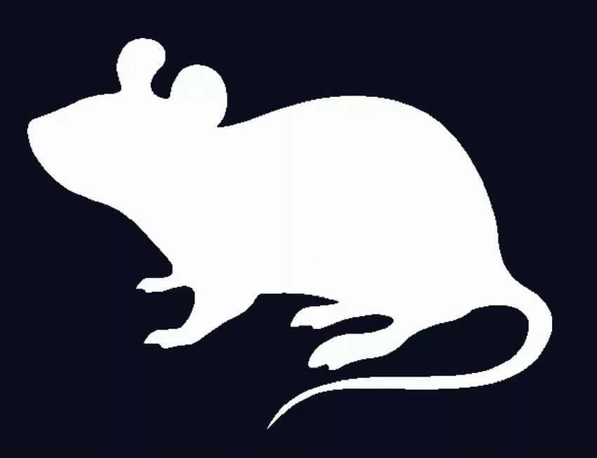 картинка крысы для вырезания угощение