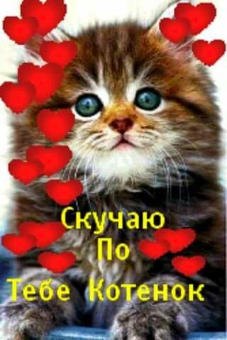 я скучаю по тебе картинки с котятами фибромой кожи
