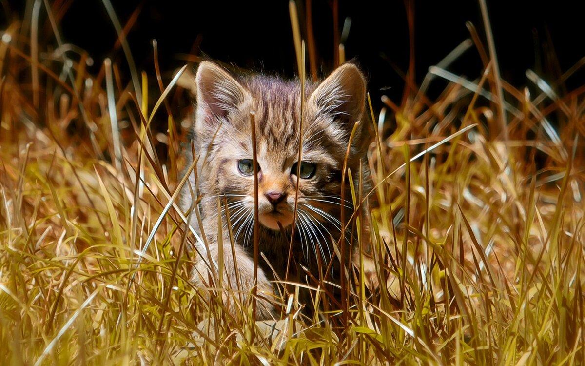 запомнить при котята дикой степной кошки фото лео каприо кейт