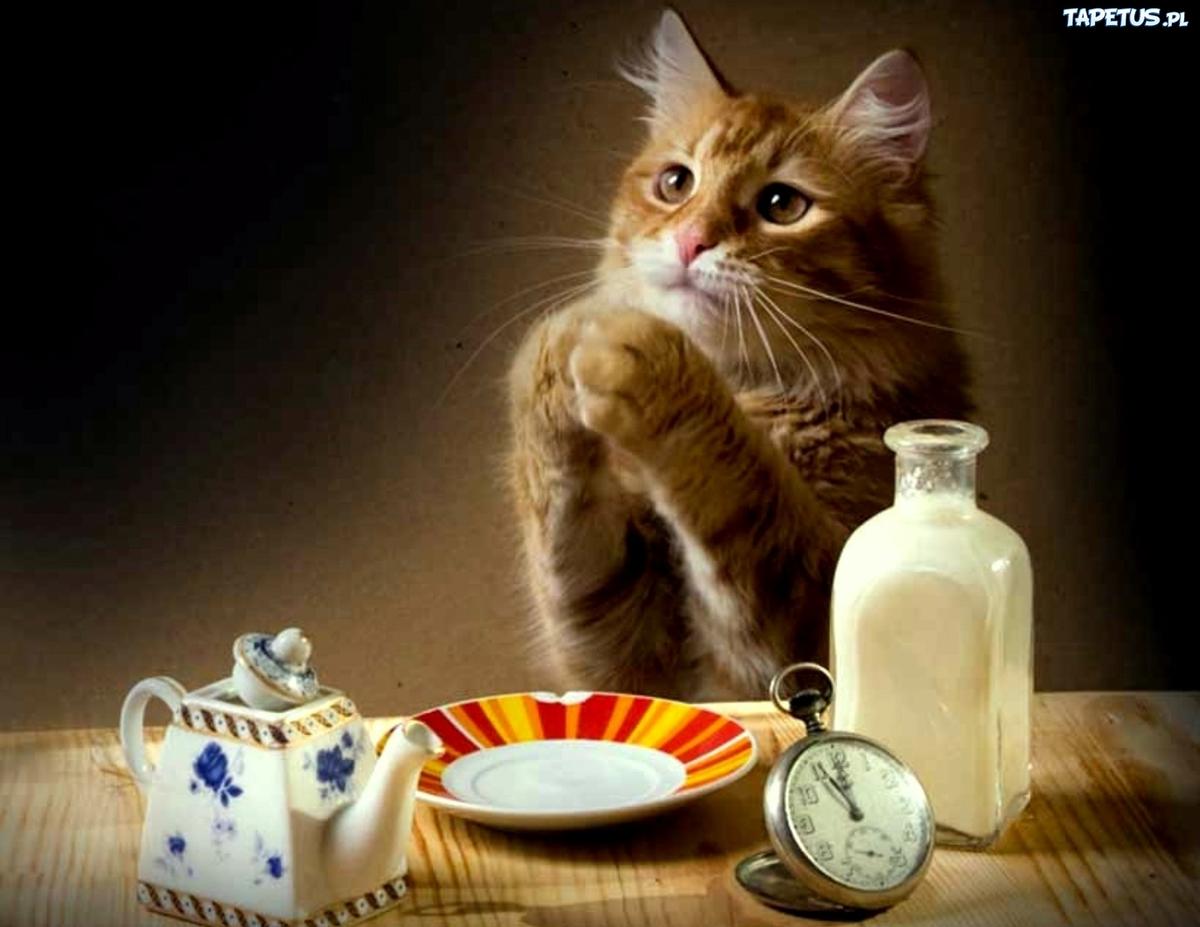 фото кошка просит кушать все катя король