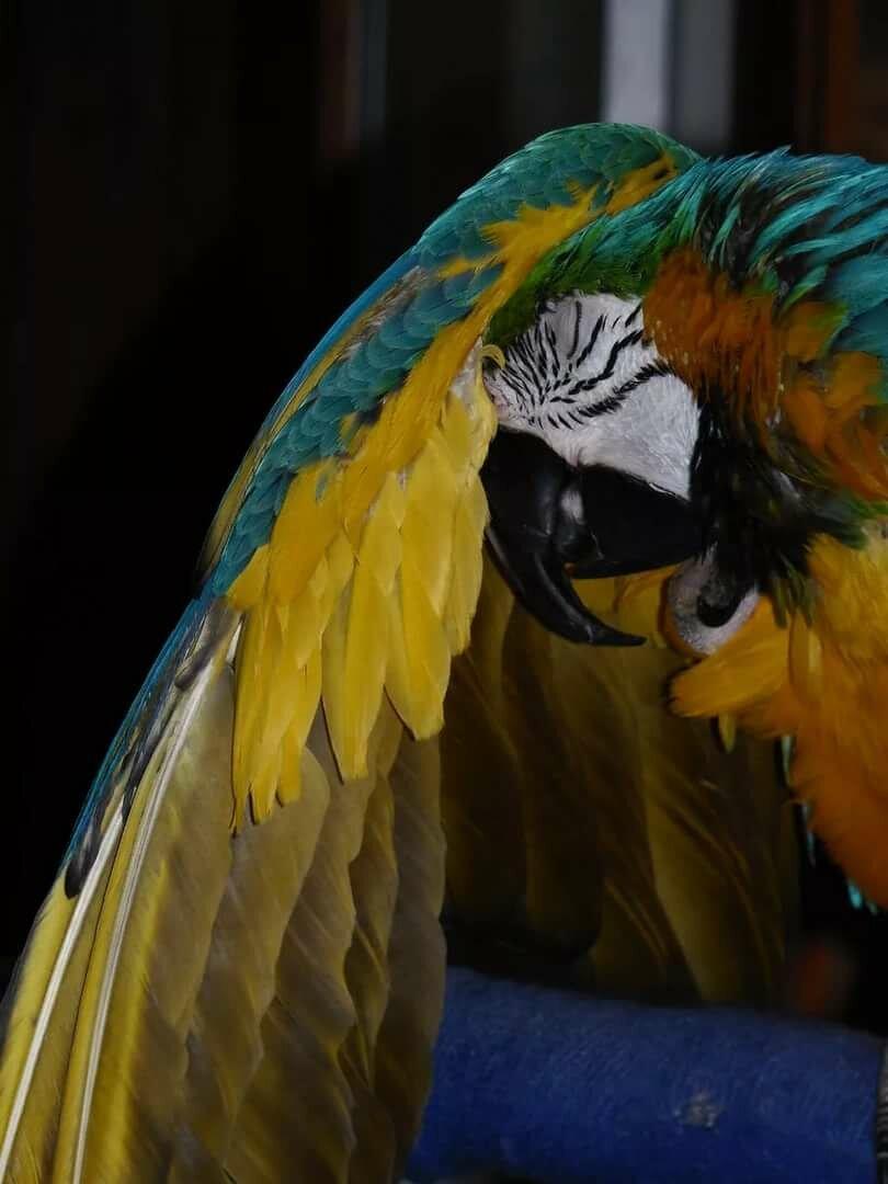 какие ноги у попугая ара картинки конкретно модели есть