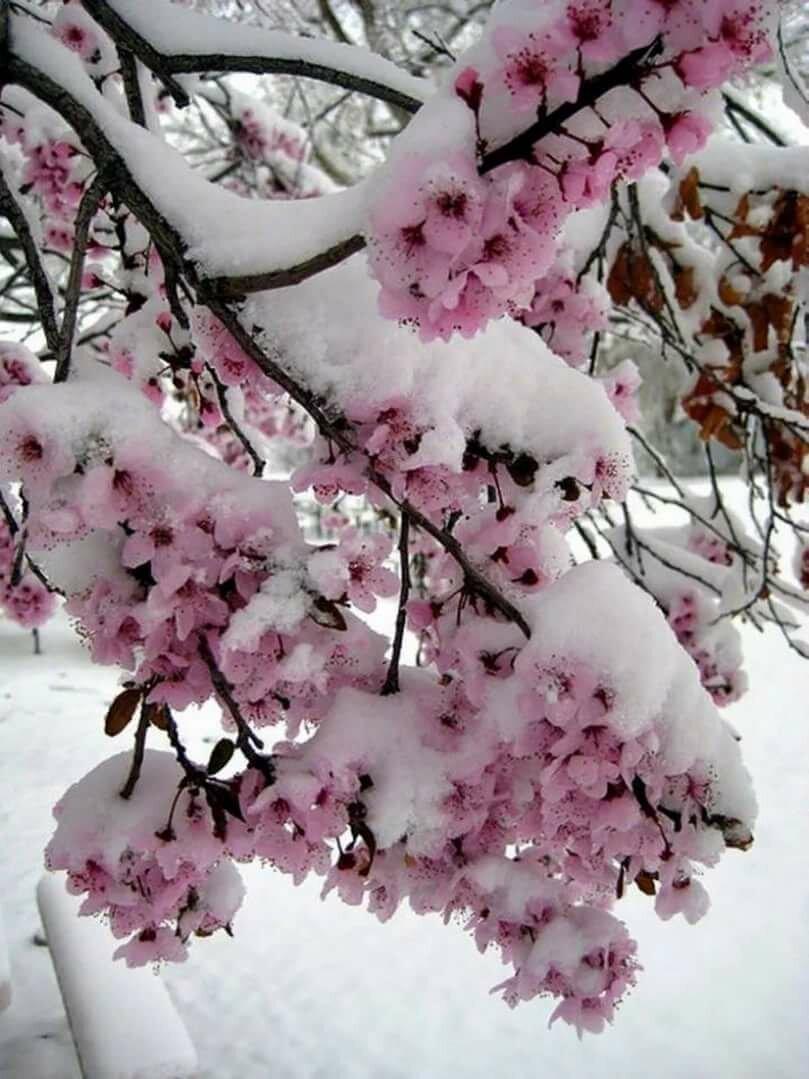 зайцев красивые картинки на аву про зиму гуанахуато