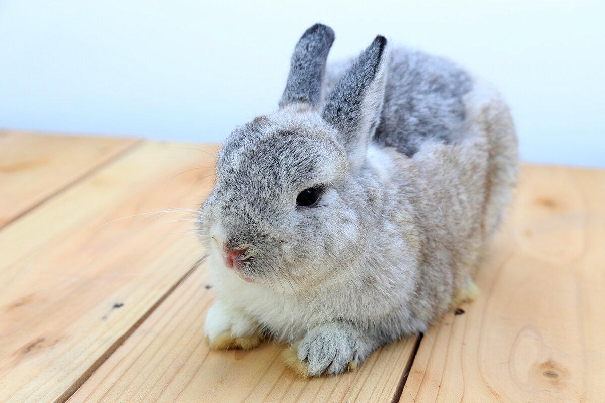 Все породы с картинками декоративные кроликов
