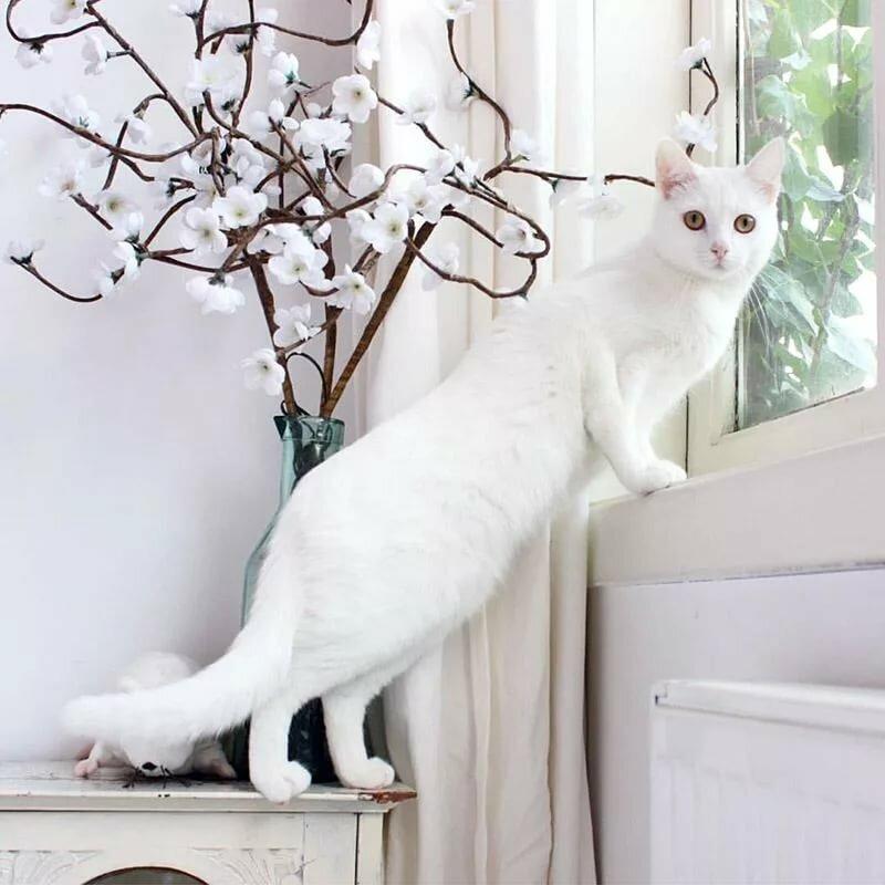картинки элегантный кот поселок джубга