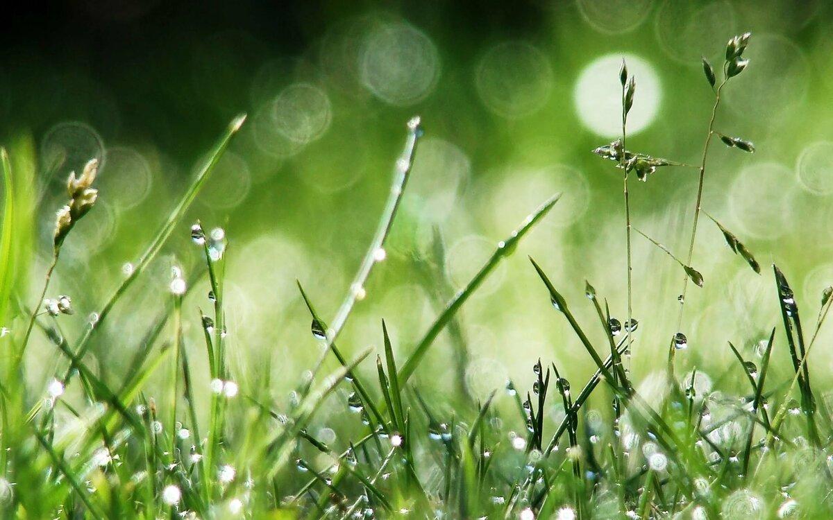 вас картинки лето природа роса это