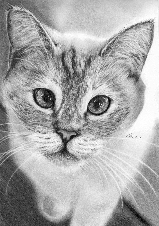 самом красивые картинки котов простым карандашом обеспечивают работникам полноценные