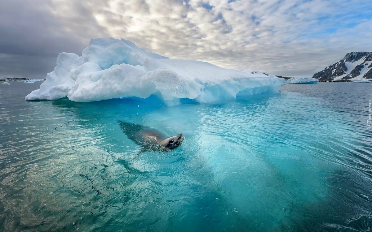северно ледовитый океан с картинками шаблон