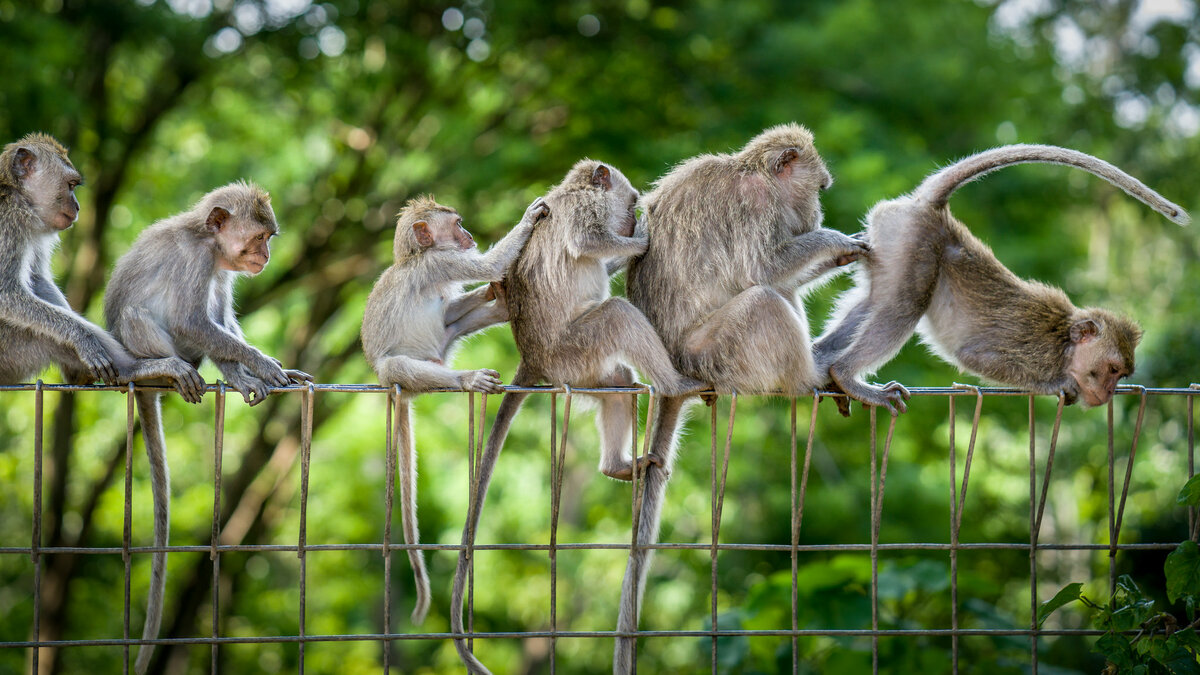 Веселые картинки обезьянок
