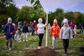 Спасибо первоклассникам и их родителям! Новые деревья во дворе школы