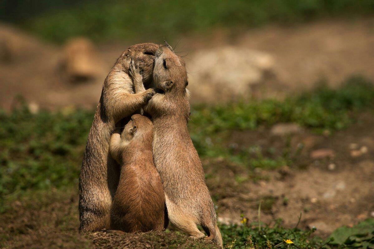Смешные картинки о любви и нежности любимому