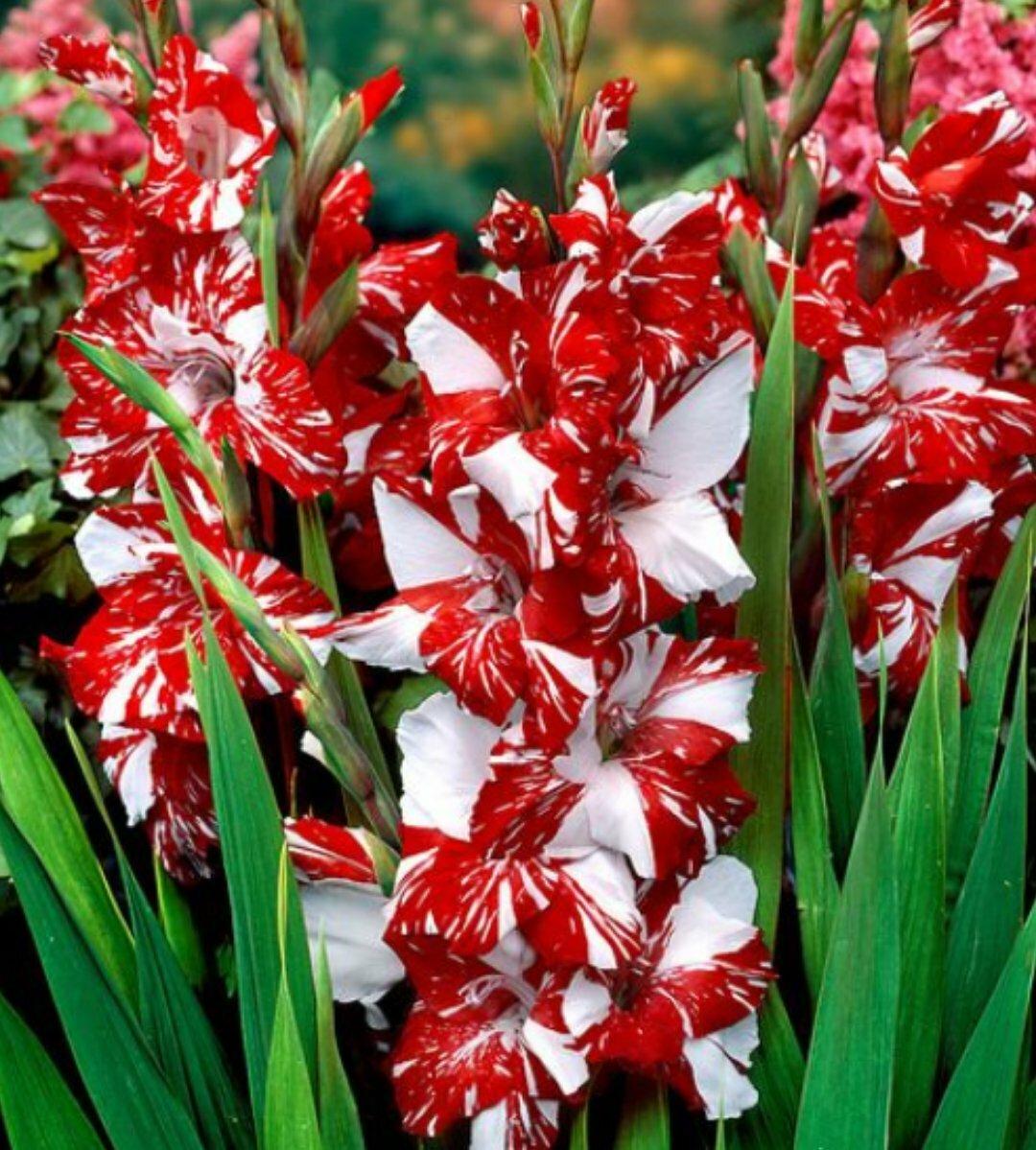 разные виды цветов и их названия с фото