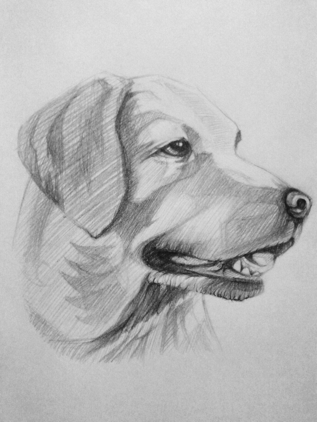 Картинка для срисовывания собака