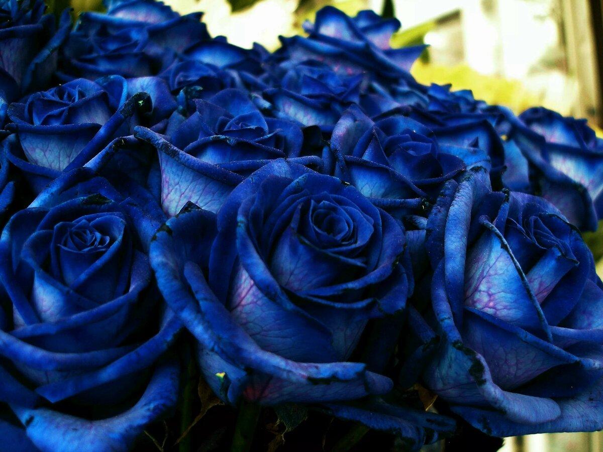 картинки цветов черные и синие наличие