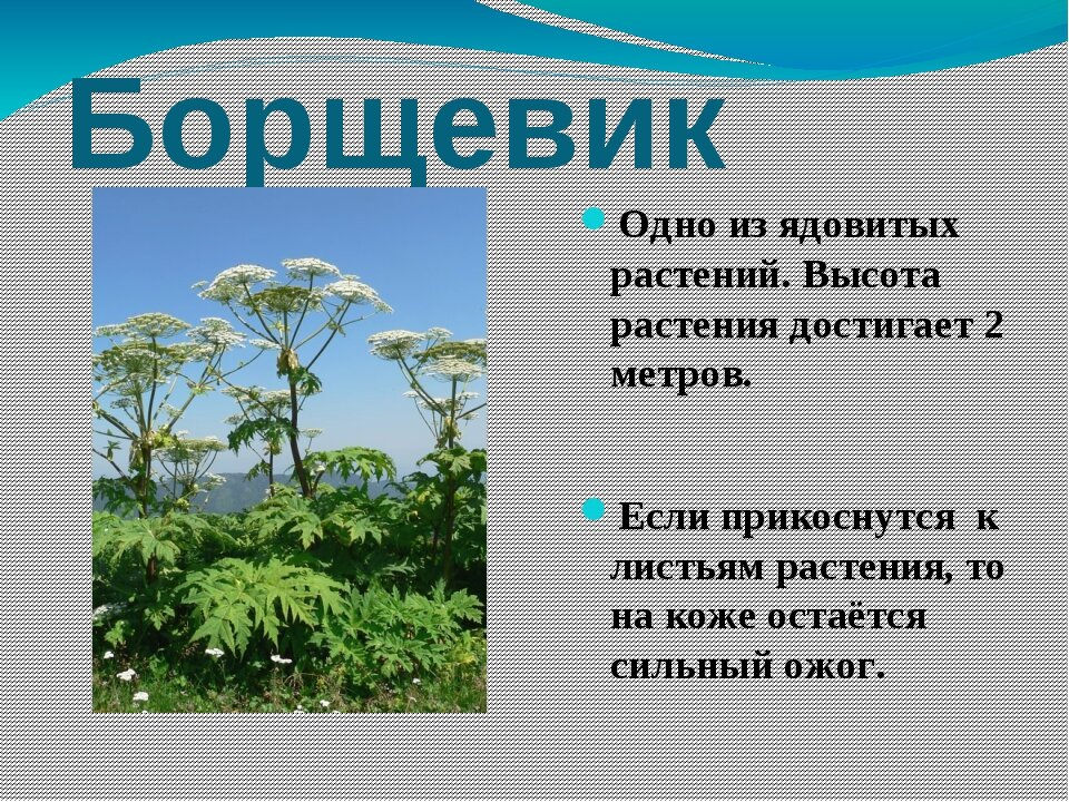 длительный картинка с рассказами лекарственные растений может быть