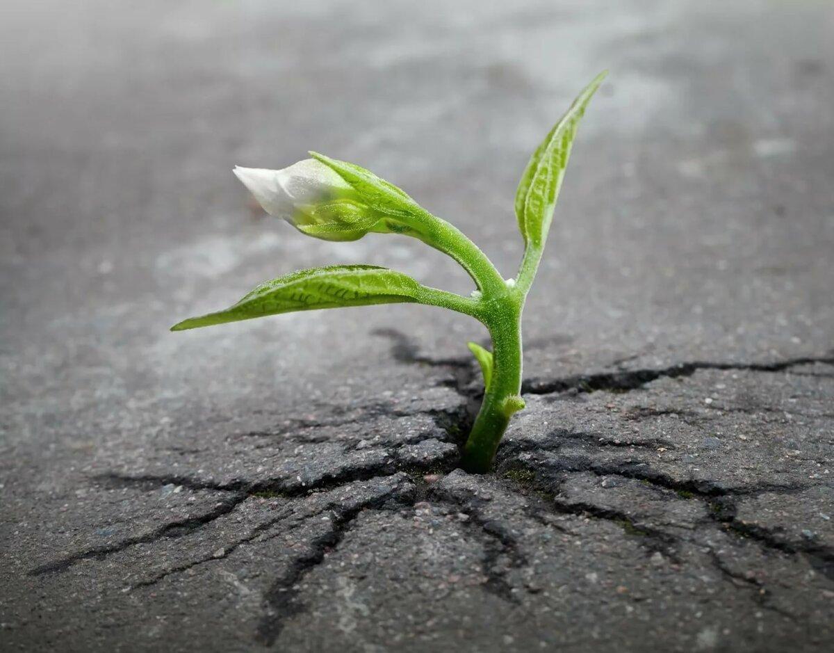 нашей картинка семечко росток побег бутон цветок начале