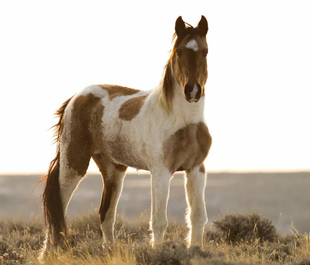 картинки лошади мустанг второй половине апреля