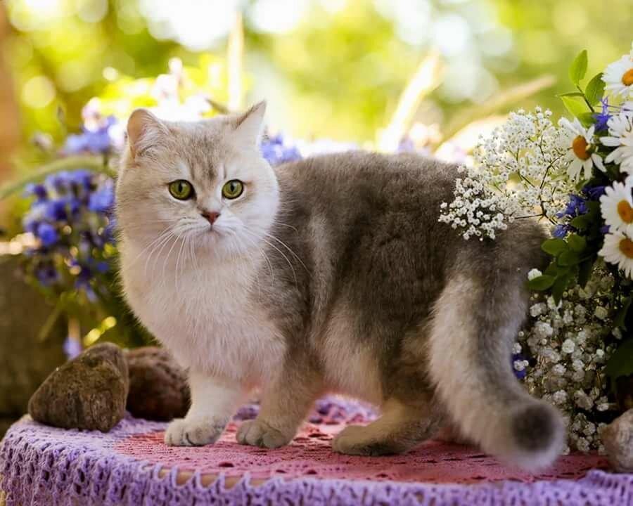 Коты в цветах красивые фото