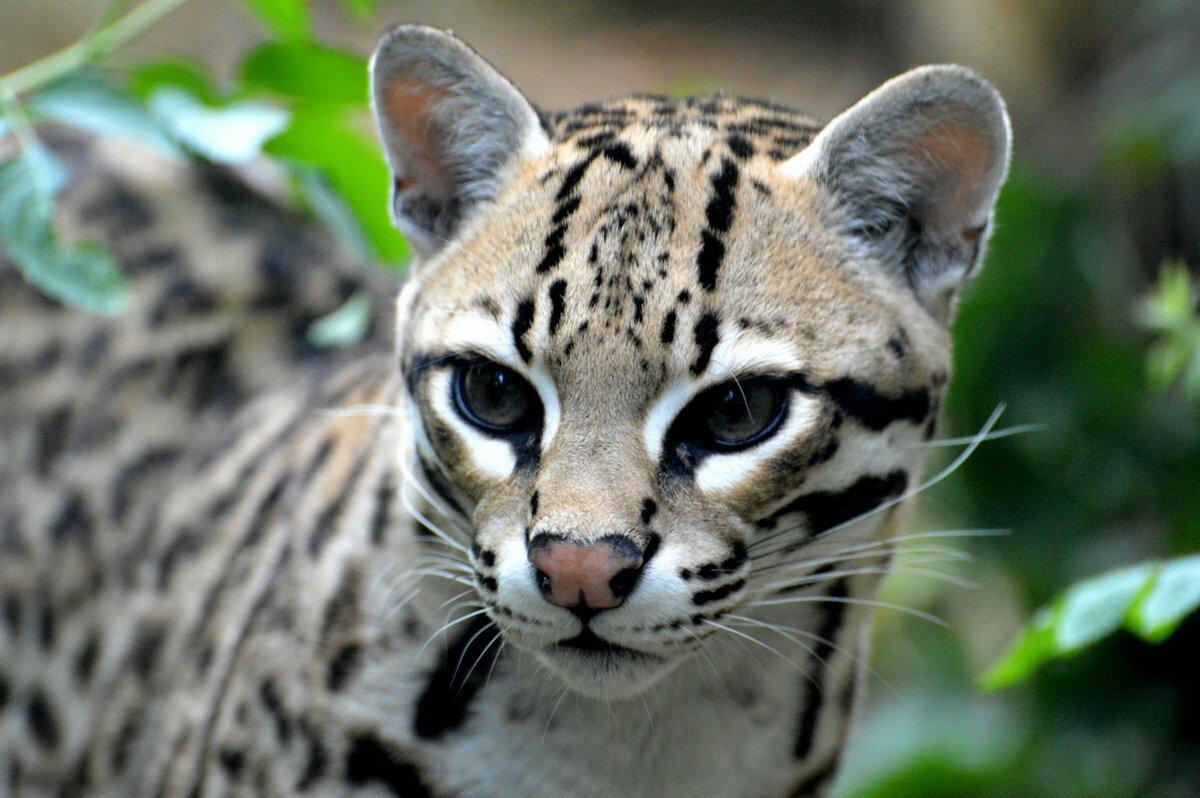 Фото самых красивых хищных животных