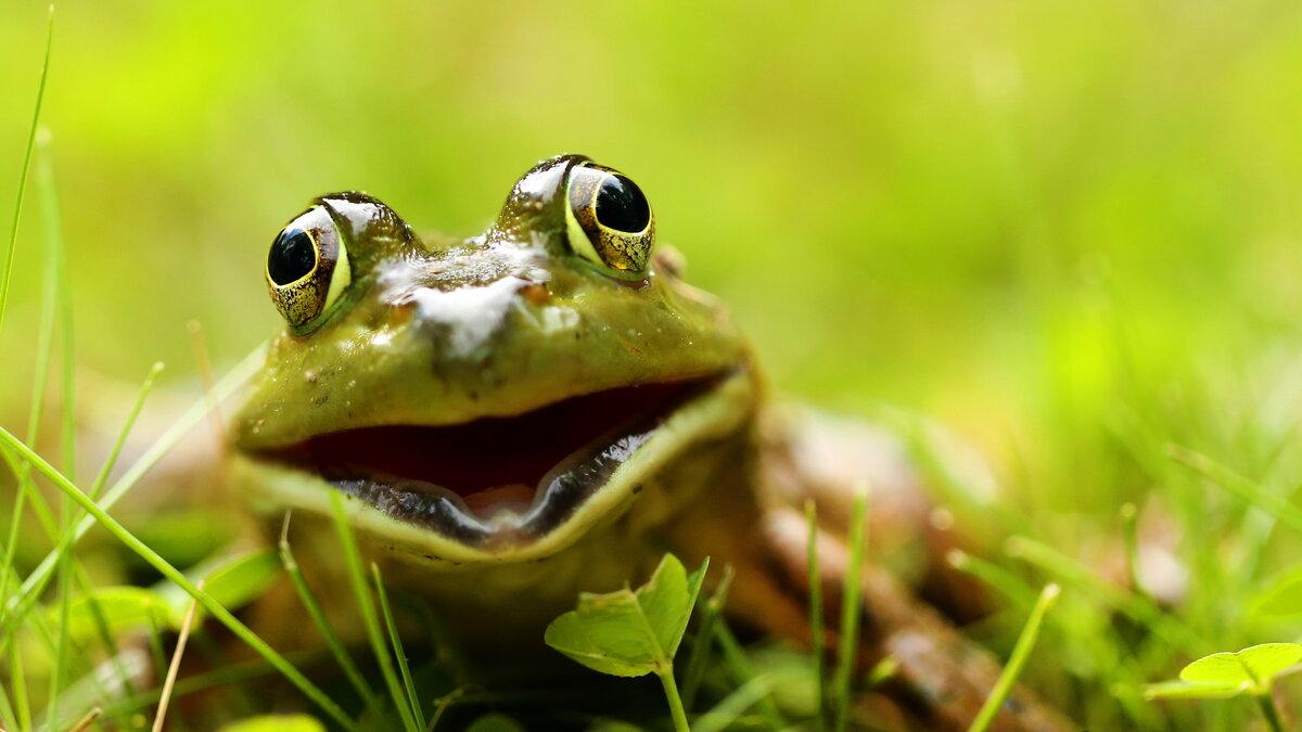 фотоконкурс улыбающихся животных ида