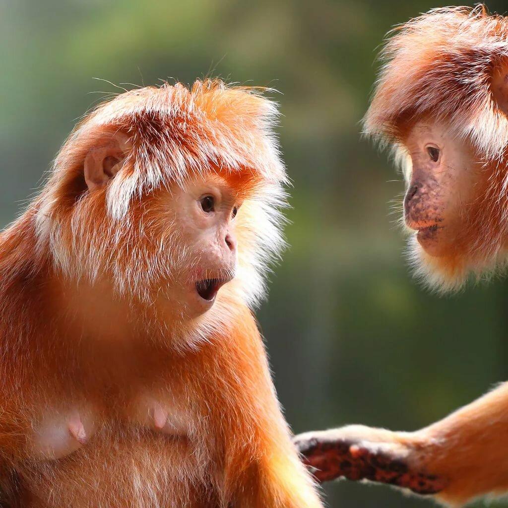 обезьяны интересные картинки