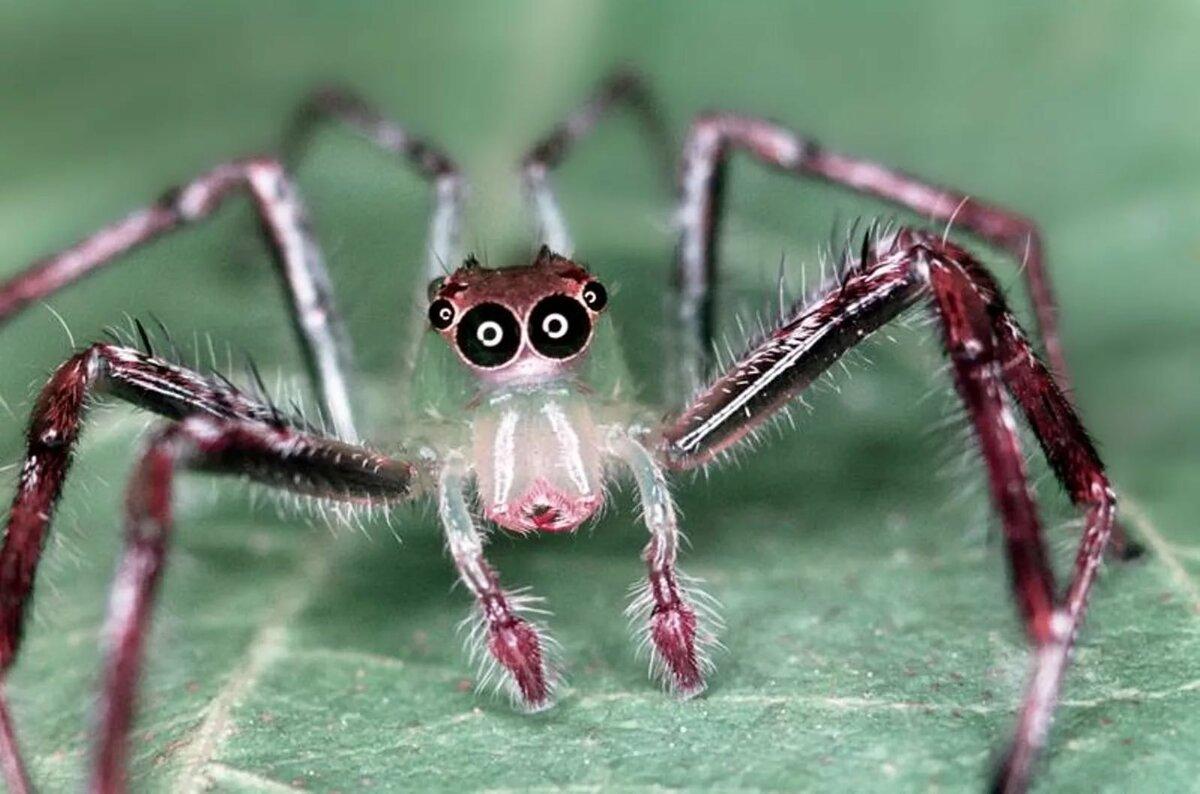 картинки о всяких пауков этот день чудесный