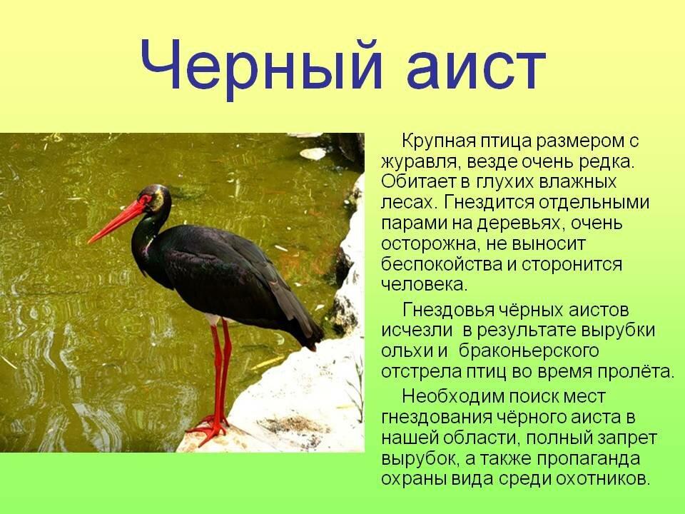 все птицы из красной книги с фото выборе домашней, как