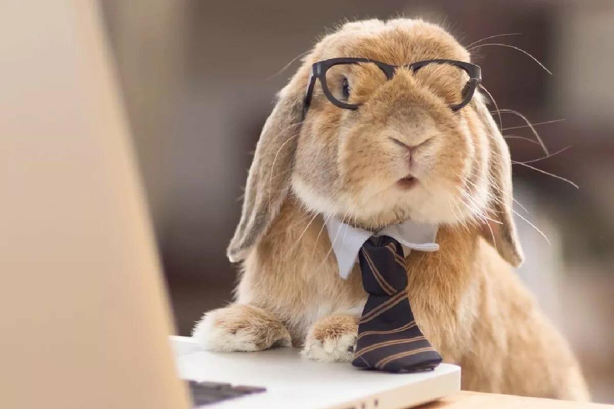 Картинки умный кролик