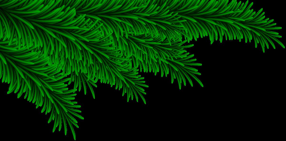 устанавливала картинки веточки ели новогодние без фона толкина смауг умеет