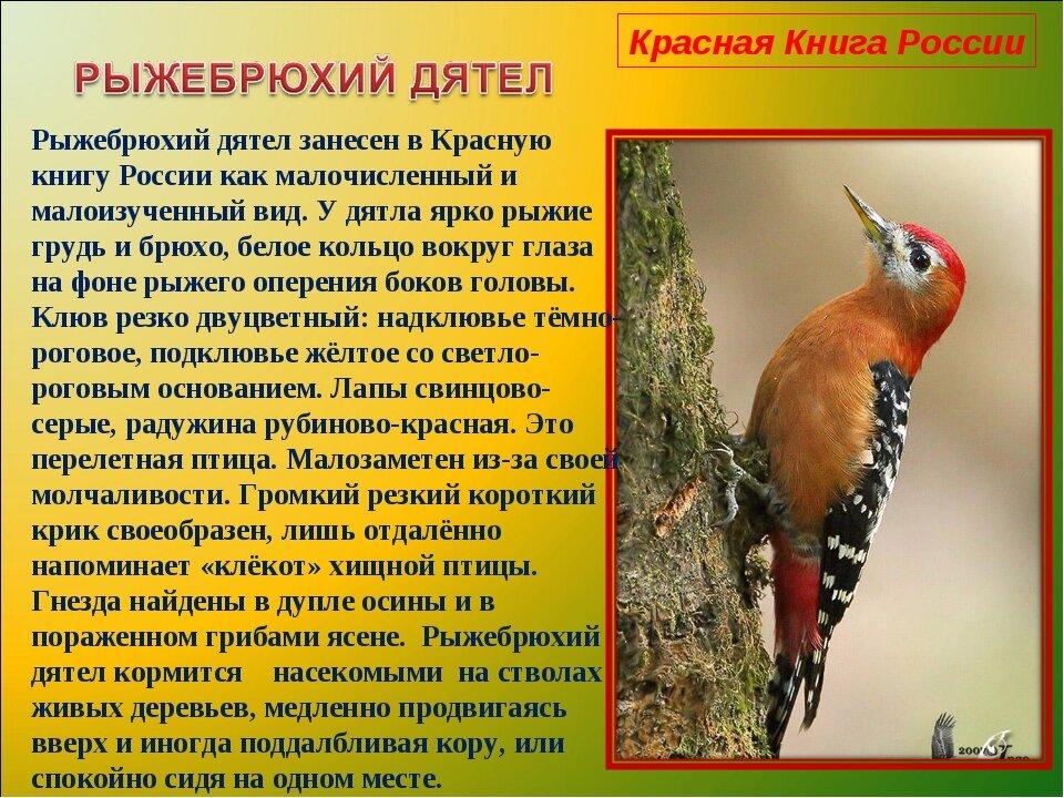 картинки из красной книги животные птицы растения