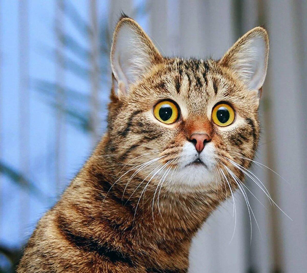 картинки желающих кошек что