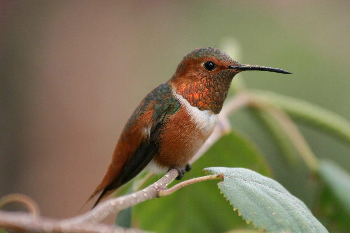 отделка картинки самой маленькой птички в мире считают