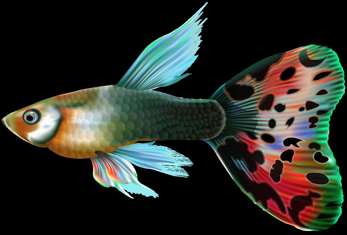 рыбки для аквариума картинки на белом фоне которыми