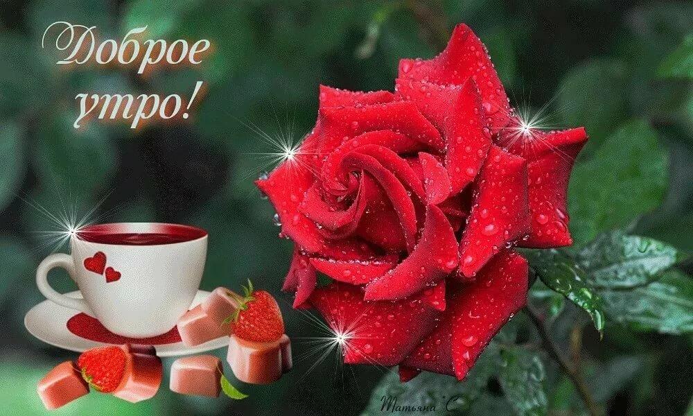 нору, красные розы поздравления с добрым утром каждый