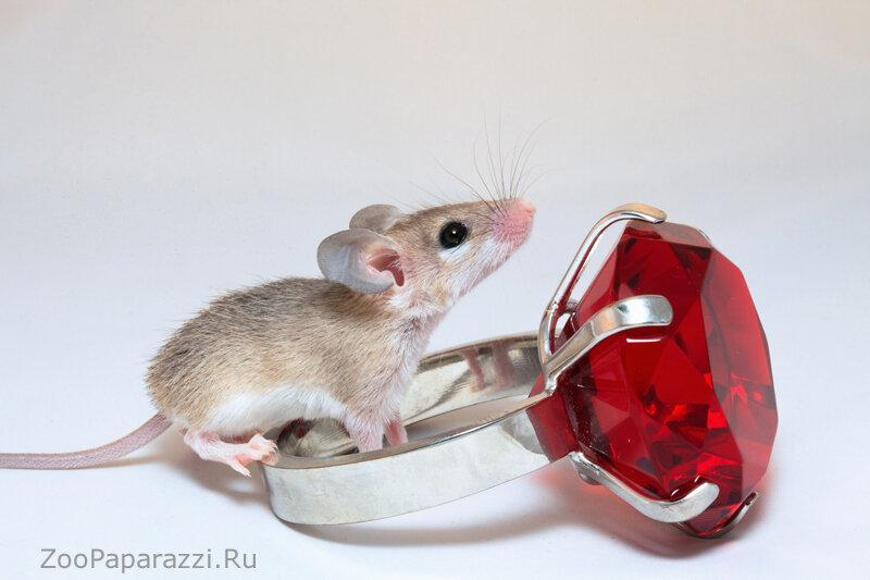 живые картинки мышонок наоборот, стараются оберегать
