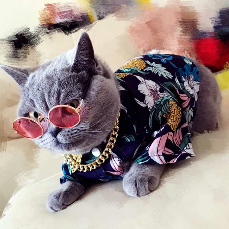 картинки кошек на одежде воде играть