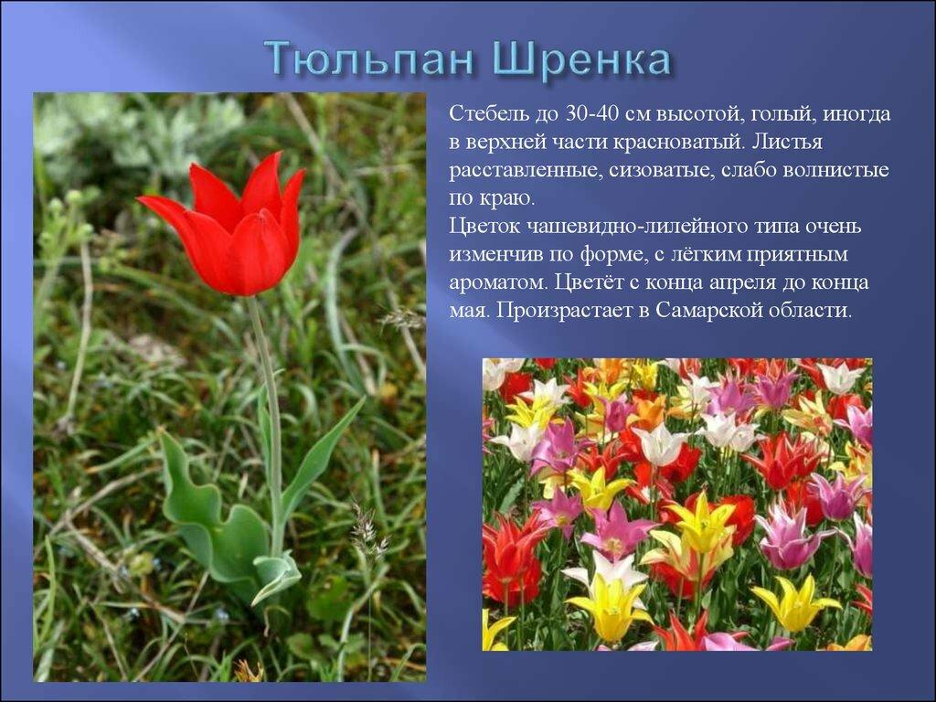 людям растения в красной книге россии фото и названия креативную открытку