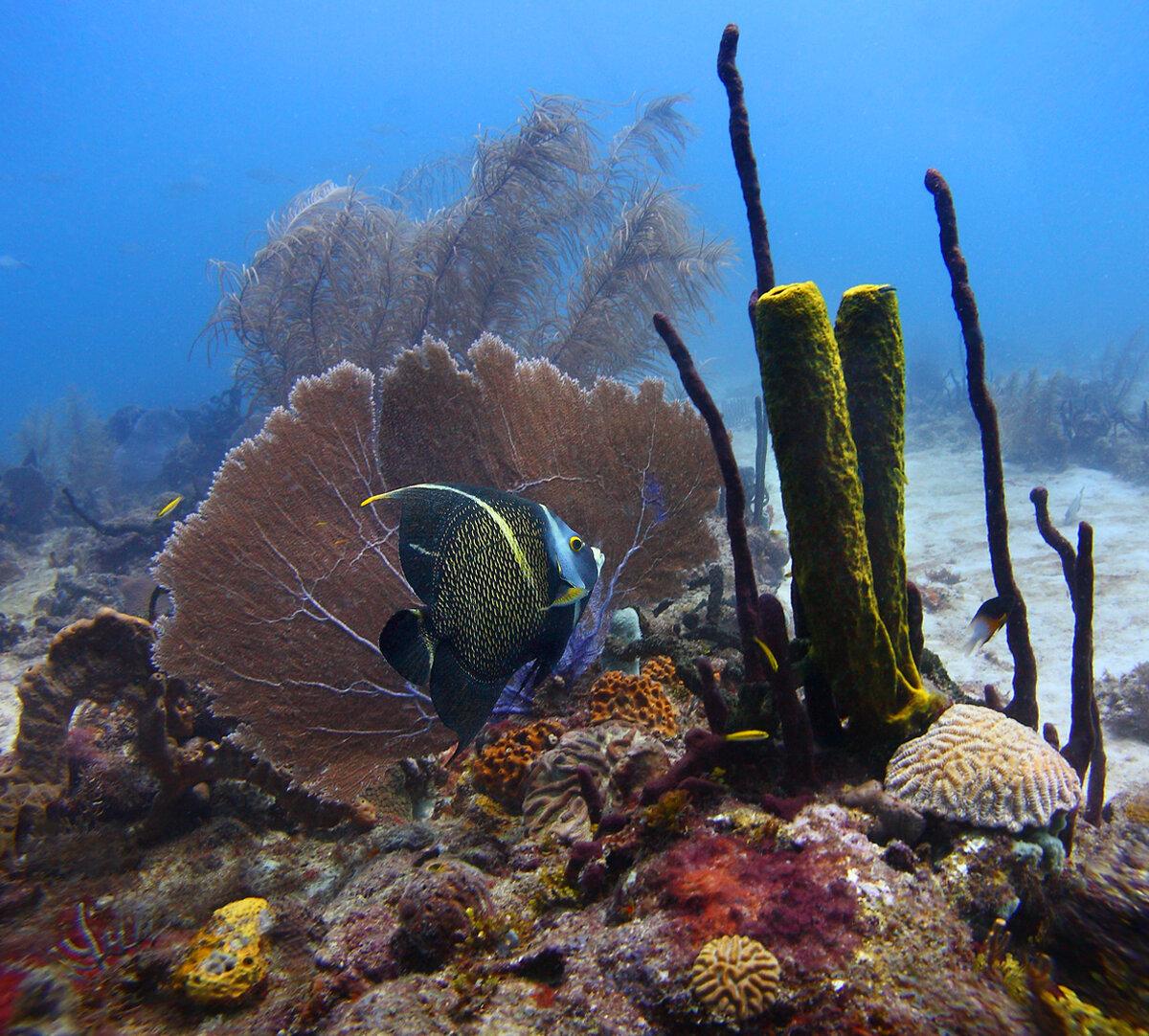 фото подводного мира пейзажа если эта информация