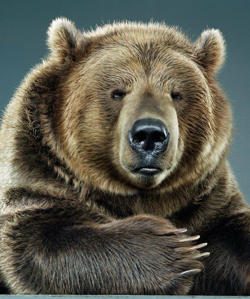 картинка медведь подмигивает