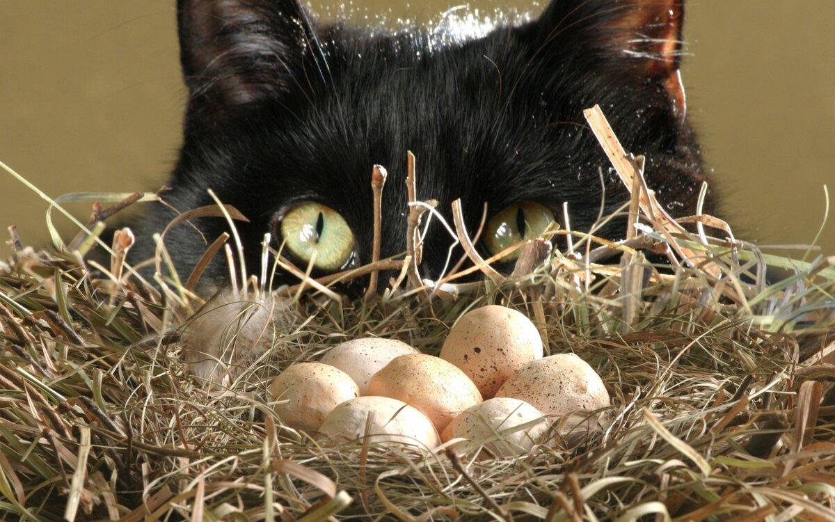 Кот в гнезде картинка