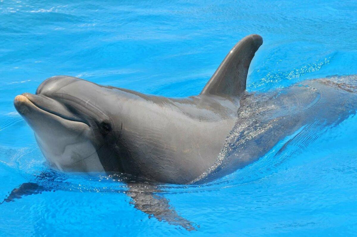 крупная картинка дельфина марко- круглосуточный