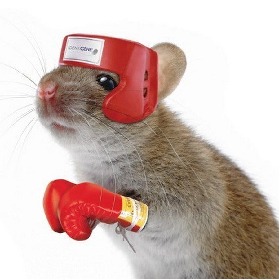 Картинки мышь прикол