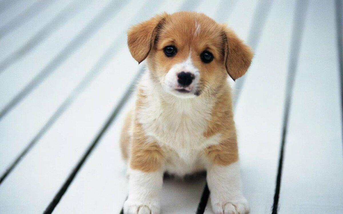 картинки симпатичного щенка сетку