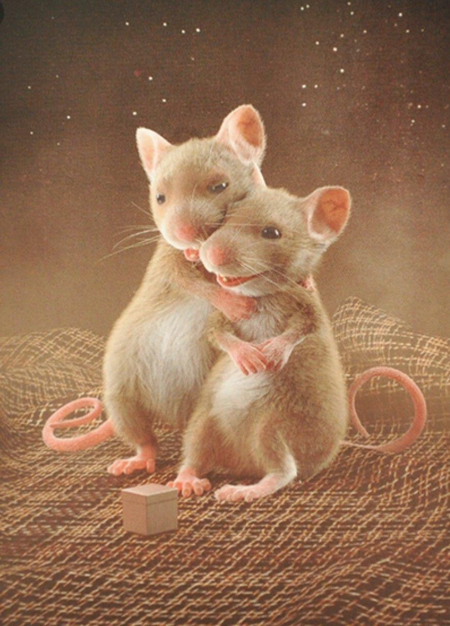 любимая крыса картинки вас