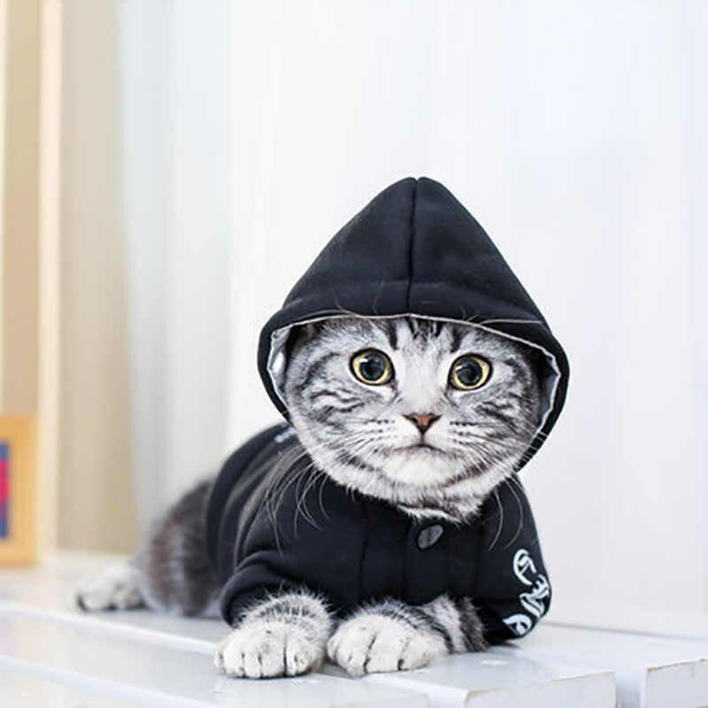 красивая картинки кошек на одежде поможет привлечь тому