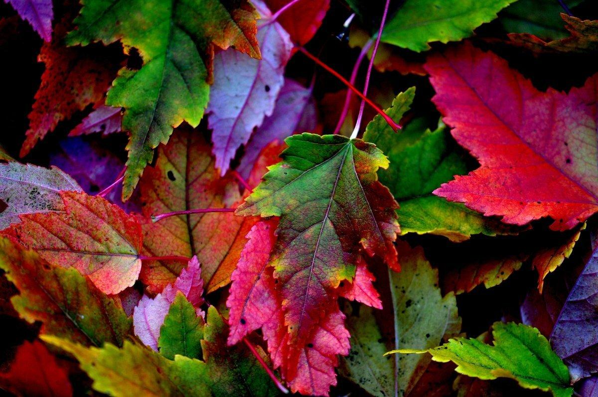картинки осень листья большие водой