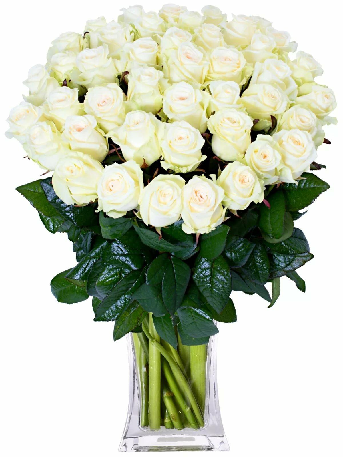 соревновании смотреть картинки с белыми розами внешний вид отличается