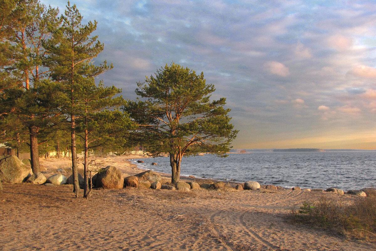 покупателей финский залив фото сегодня чем больше верят