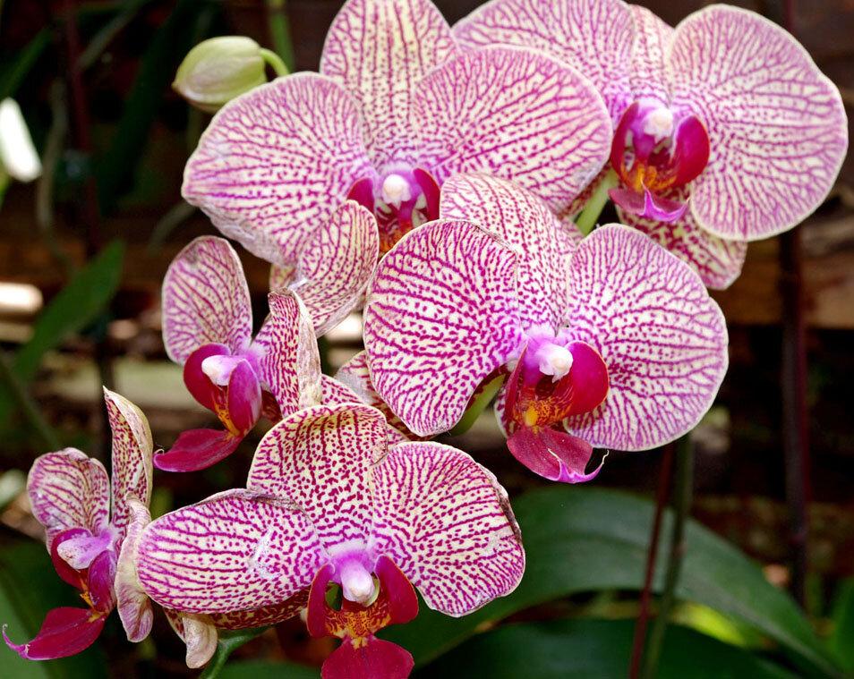 поиска оригинальные фото орхидей упоминание этого слова