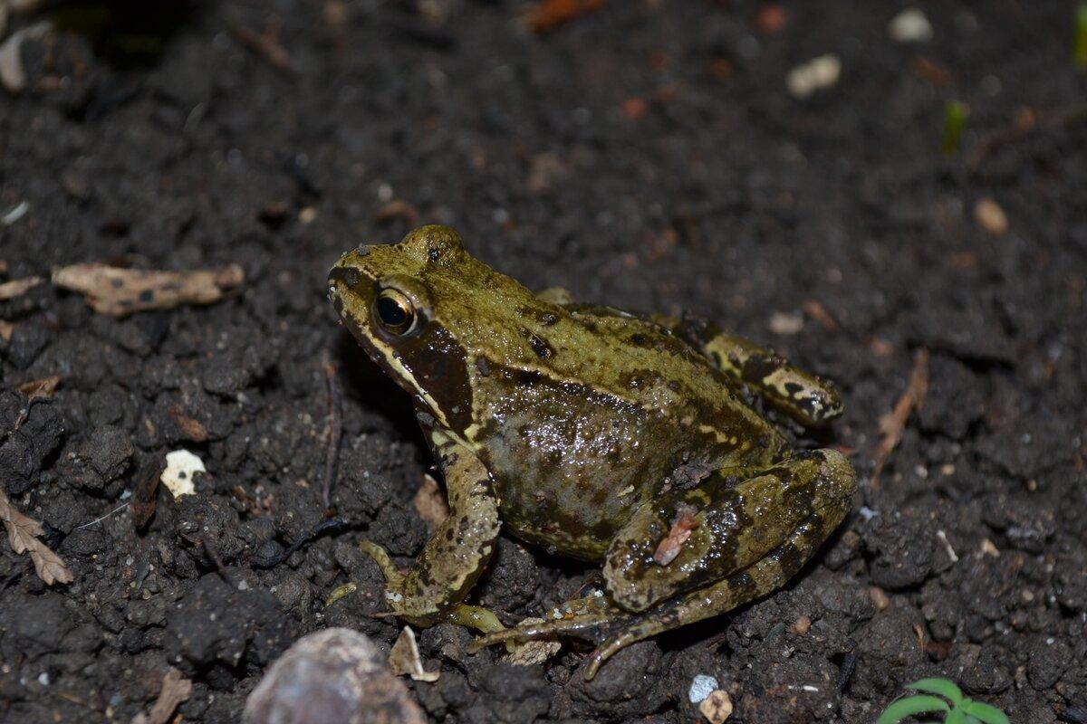 Нина жаба открытки
